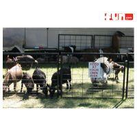Petting-Zoo-Rental